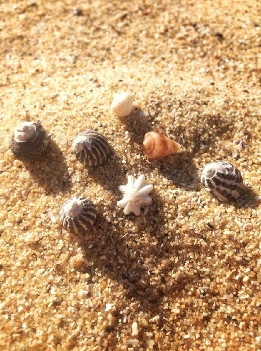 Shells, Little Beach @ 2016