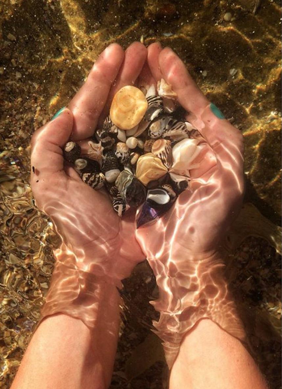 Shells, Little Beach @ 2016