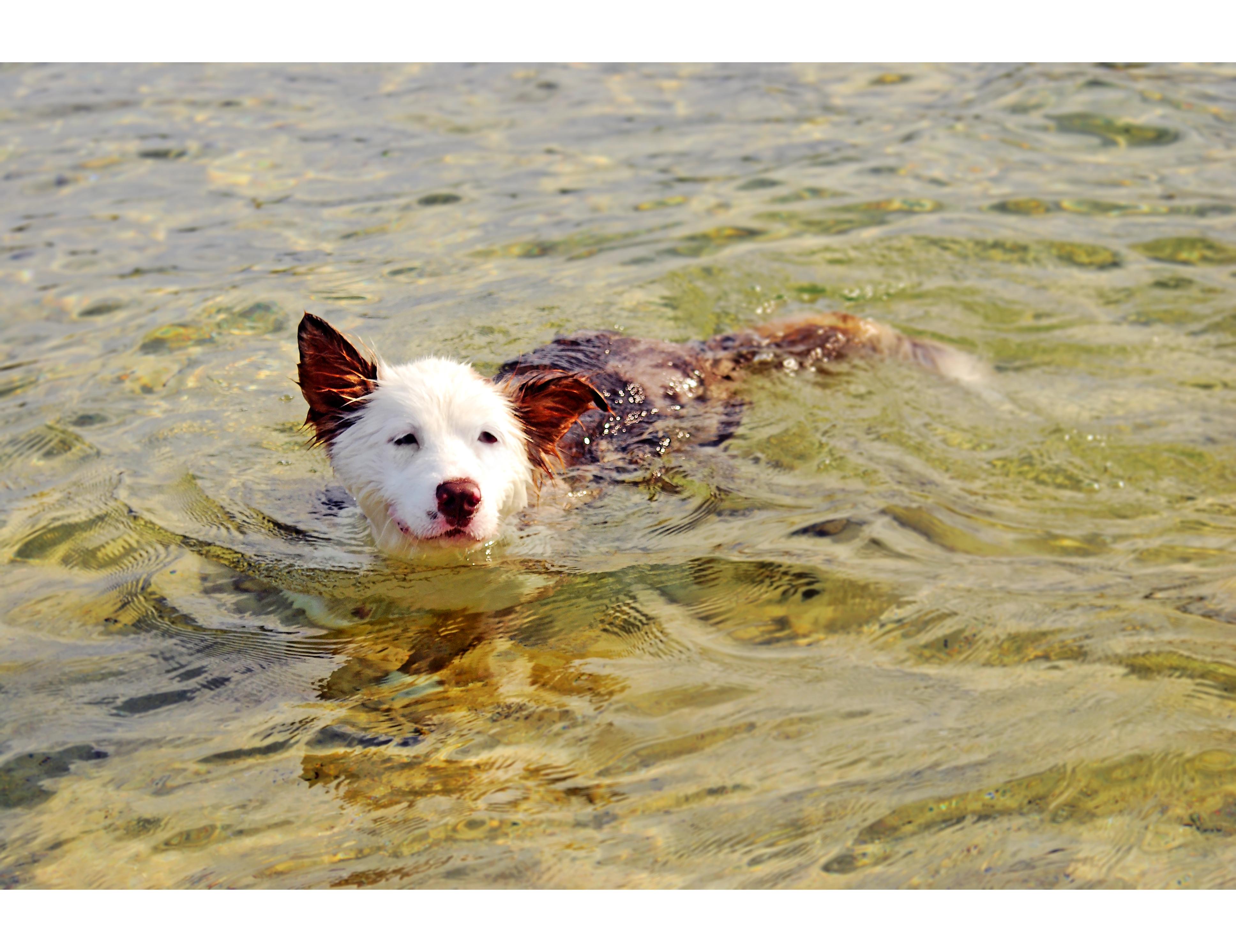 Dog, Little Bay @2016